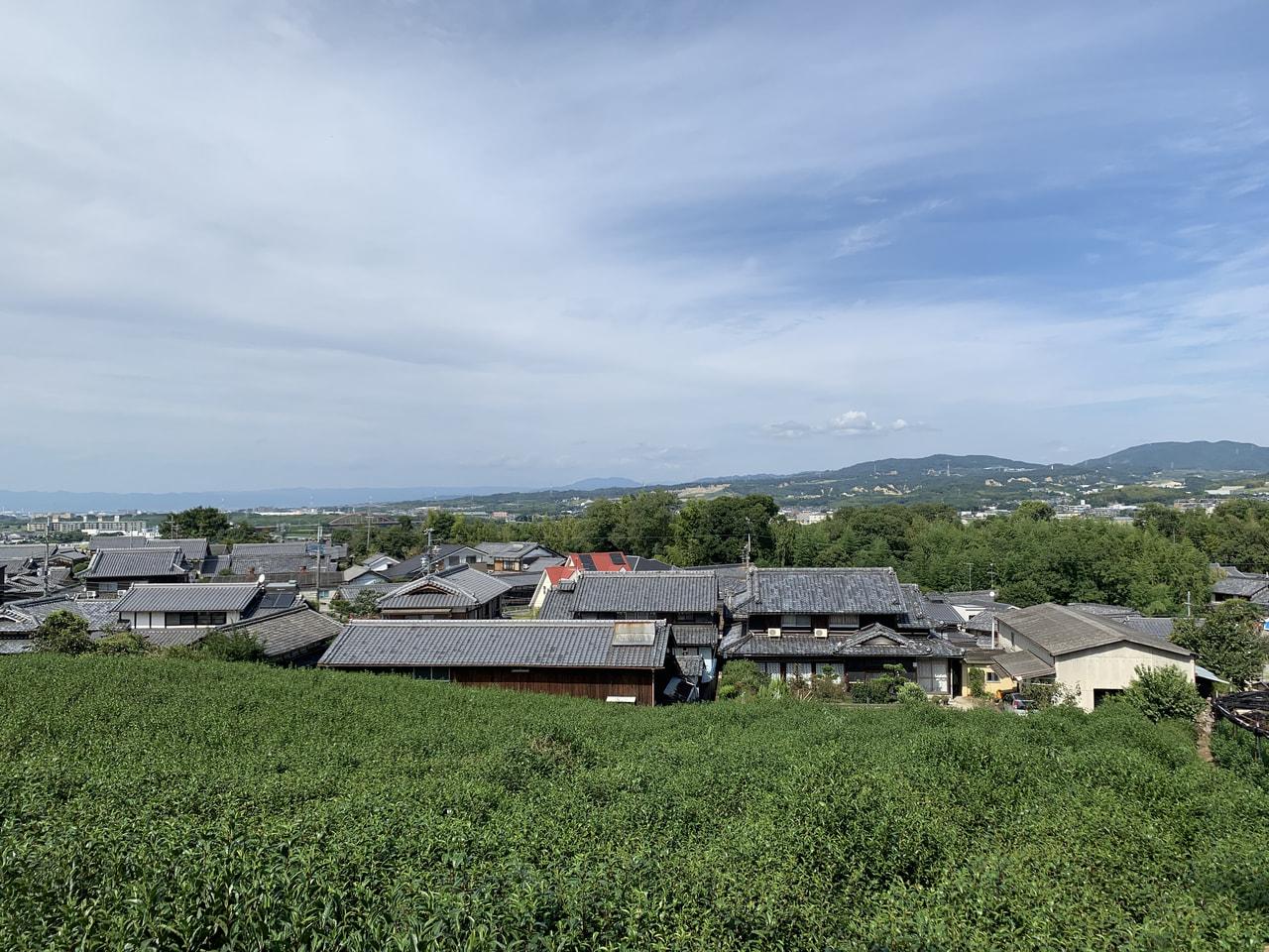 ツール・ド・京田辺の見所1茶畑