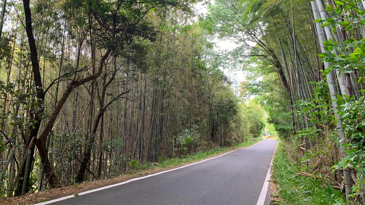 ツール・ド・京田辺の見所2竹林